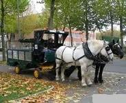 L'utilisation de voiture hippomobiles en ville