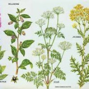 Les plantes Toxique: